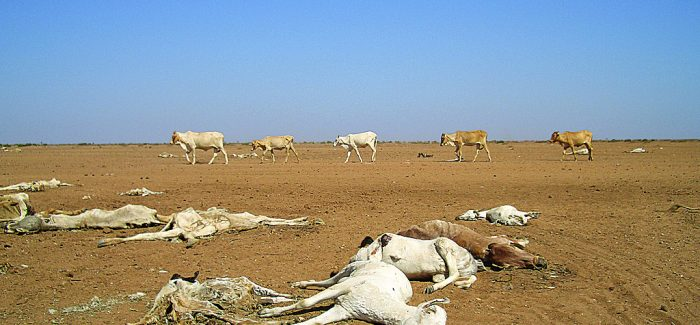 EAST AFRICA FAMINE: 'People are eating termites'