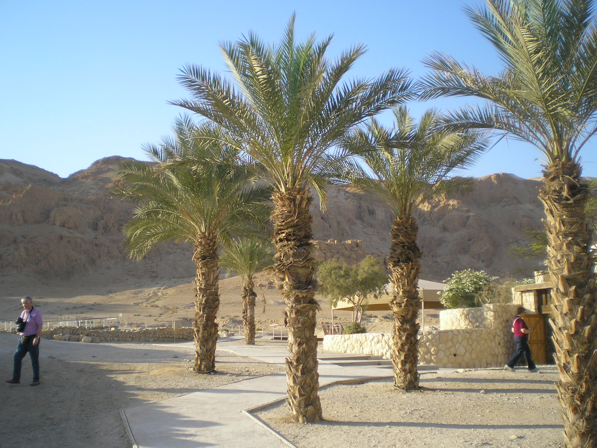 Qumran, where the Dead Sea Scrolls were discovered by a shepherd boy in 1947