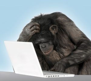 chimps show no sign of developing language